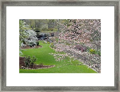 Flowering Dogwoods In Cleveland Park's Rock Quarry Falls  Framed Print