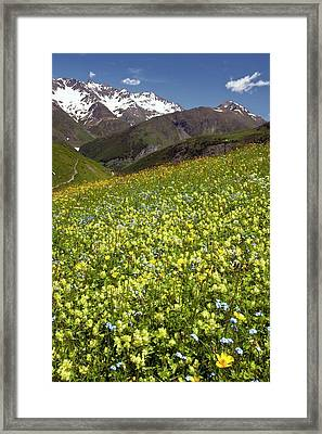 Flowering Hay Meadow Framed Print by Bob Gibbons