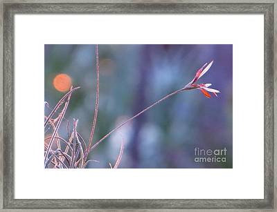 Flowering Moss Framed Print by Joy Hardee