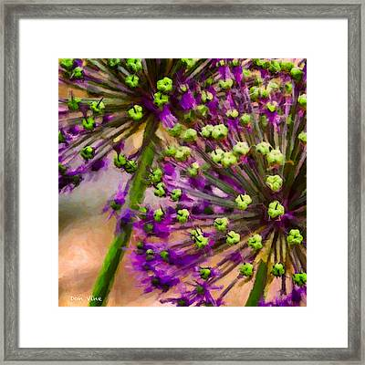 Flowering Onion Framed Print