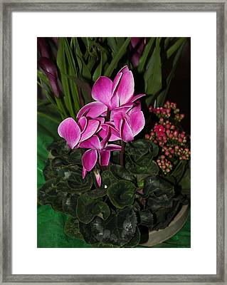 Flowering Plant Framed Print by Cyril Maza