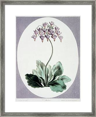 Flowering Plant Framed Print by Natural History Museum, London/science Photo Library