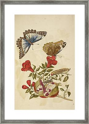 Flowering Plant With Red Flowers Framed Print by British Library