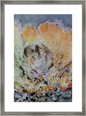 Flowering Plume Agate, Quartzsite Framed Print by Darrell Gulin