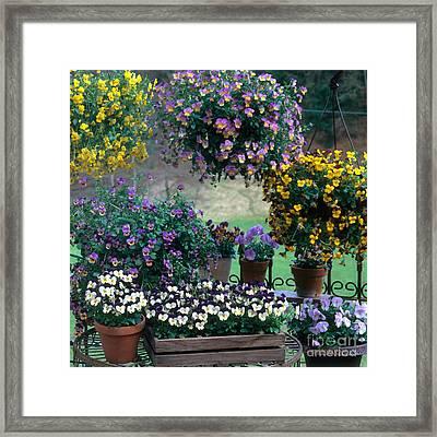 Flowering Potted Plants Framed Print