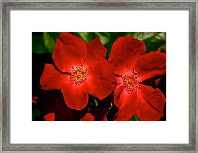 Flowering Reds Framed Print by Kathi Isserman