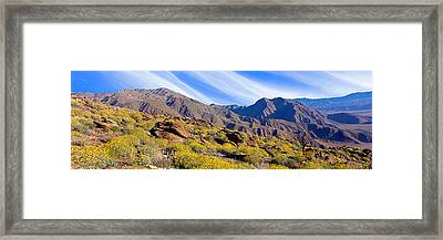Flowering Shrubs In Anza Borrego Desert Framed Print