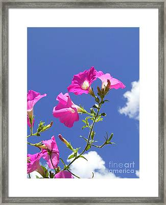 Flowering To Life II Framed Print by Daniel Henning