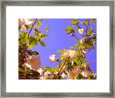 Flowering Tree 2 Framed Print