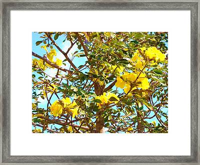 Flowering Tree Framed Print by Van Ness
