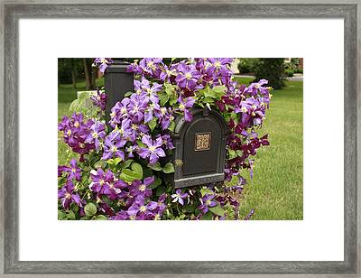 Flowering Vine  Framed Print by Ann Murphy