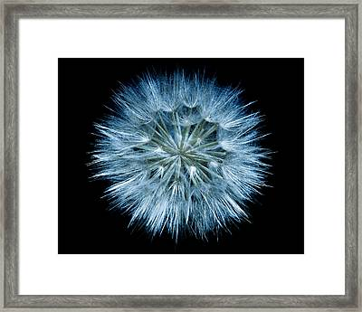 Flowering Weed 001 Framed Print