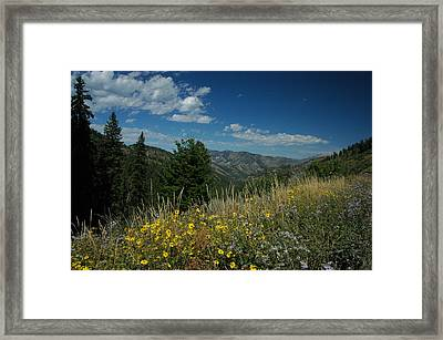 Flowering Yellowstone Framed Print by Larry Moloney