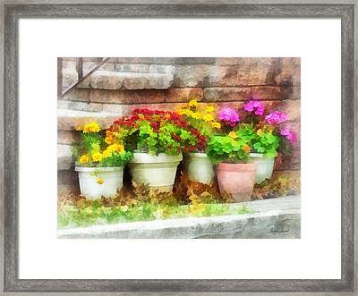 Flowerpots With Autumn Flowers Framed Print by Susan Savad
