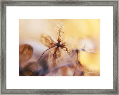 Flowers 3 Framed Print by Justyna JBJart