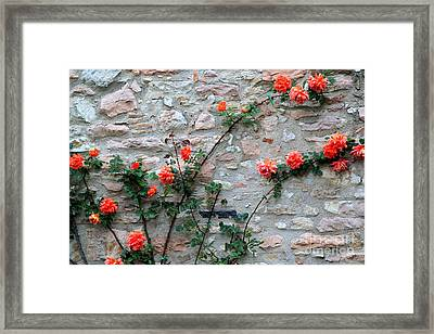 Framed Print featuring the photograph Flowers 5-assisi by Theresa Ramos-DuVon
