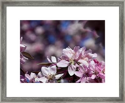 Flowers Framed Print by Adam L
