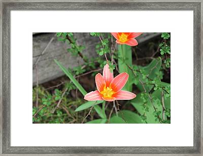Flowers Against A Plank Framed Print