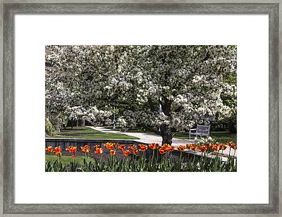 Flowers And Bench At Michigan State University  Framed Print by John McGraw