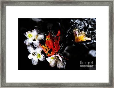 Flowers And Leaf Floating Framed Print by Thomas R Fletcher