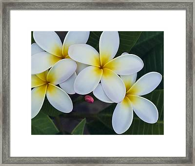 Flowers And Their Bud Framed Print