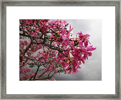 Flowers And Thorns And The Sky Adorned  Framed Print