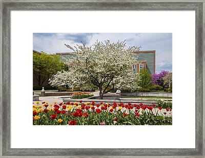 Flowers And Tree At Michigan State University  Framed Print