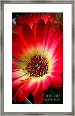 Flowers Are Happiness Framed Print