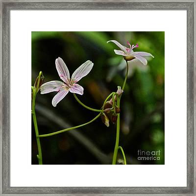 Flowers Are Smiles Framed Print by Byron Varvarigos