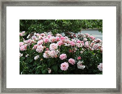 Flowers - Arlington National Cemetery - 01131 Framed Print