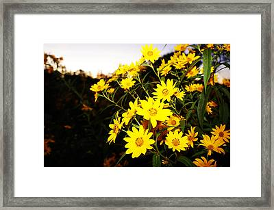 Framed Print featuring the photograph Flowers by Artistic Panda