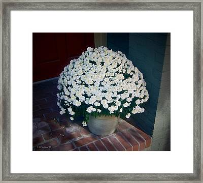 Flowers At The Door Framed Print by Brian Wallace