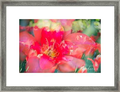 Flowers Bloom In Multiples Framed Print by Sonja Quintero