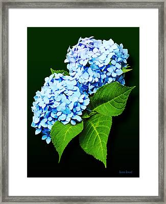 Flowers - Blue Hydrangea Profile Framed Print