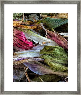 Flowers Framed Print by Bob Orsillo