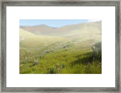Flowers Coming Out Of The Fog Framed Print