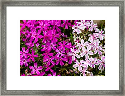Flowers Divided Framed Print
