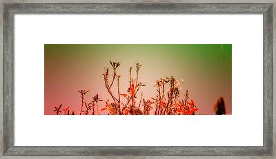 Flowers Dreaming Framed Print by Vidyalakshmi AC