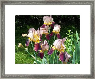 Framed Print featuring the photograph Flowers by Eric Switzer
