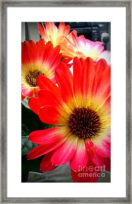 Flowers Fine Tuned Framed Print