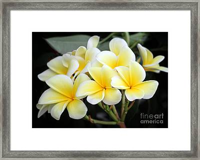 Flowers For A Lei Framed Print