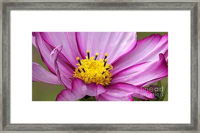 Flowers For The Wall Framed Print by Eunice Miller