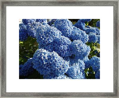 Flowers From Dalles Dam Visitor Center Framed Print by Iam Wayne