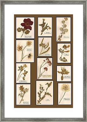Flowers From The Holy Land 1904 Framed Print by Antique Engravings