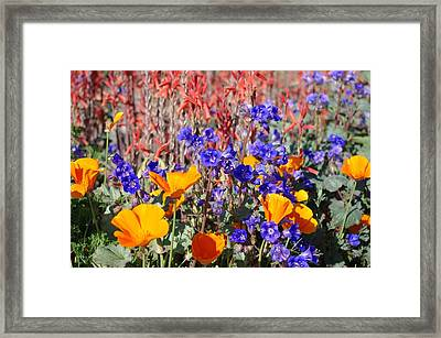Framed Print featuring the photograph Flowers Gone Wild by David Rizzo