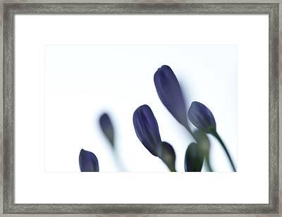 Flowers Framed Print by Modern Art Prints