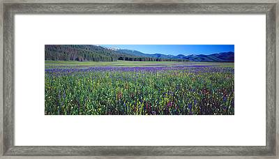 Flowers In A Field, Salmon, Idaho, Usa Framed Print by Panoramic Images