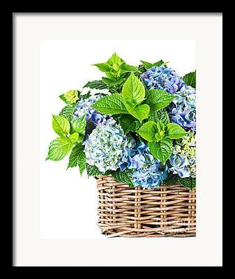 Flower Delivery Nyc Framed Prints