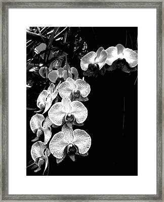Flowers In Black And White Framed Print