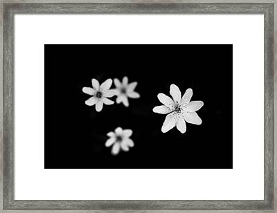 Flowers In Black Framed Print